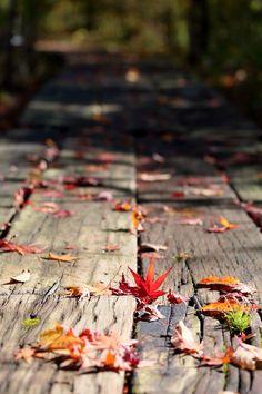 Fall ❤️