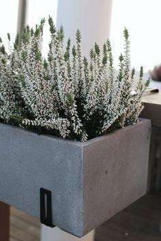 Kuistin kautta: Syyspuuhia, univajetta ja hassuttelua Box Garden, Garden Ideas, Home And Garden, Outdoor Spaces, Outdoor Living, Succulent Terrarium, My Dream Home, Terrace, Succulents
