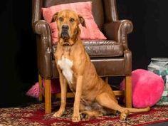 RED is an adoptable Hound Dog in Vero Beach, FL.  ...