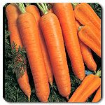 Napoli F1 Hybrid Carrot.  Great, classic flavor and crunch.  High in vitamin A and fiber.  Grows from June - Dec.