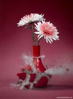 Flowervases » Biskvitka.net - The First Bulgarian Entertainment Portal