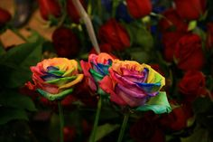Rainbow Roses Are Extra Special Flowers For The Extra Special People In Your Life | The Fun Times Guide to Holidays and Parties