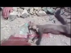 Extremely Dehydrated Mongoose Gets Saved While At The Brink Of Death! - YouTube
