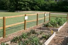 Raised beds may be a great choice for backyard gardens.