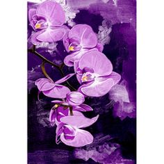 @Overstock - Artist: Maxwell Dickson Title: Purple OrchidProduct type: Gallery-wrapped canvas arthttp://www.overstock.com/Home-Garden/Maxwell-Dickson-Purple-Orchid-Canvas-Wall-Art/6553935/product.html?CID=214117 $156.99