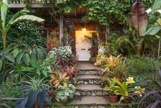 The Exotic Garden | A subtropical garden in a temperate climate that defies being in a city.