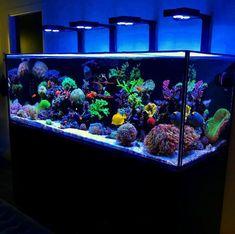 Aquarium Sharks, Wall Aquarium, Coral Reef Aquarium, Aquarium Design, Marine Aquarium, Aquarium Fish Tank, Cool Fish Tanks, Saltwater Fish Tanks, Saltwater Aquarium