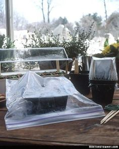 Step 5  Cover containers with clear plastic before placing them 2 to 3 inches below grow lights. For seeds that require darkness to germinate, use an opaque cover, and set them in a warm spot, such as the top of a refrigerator