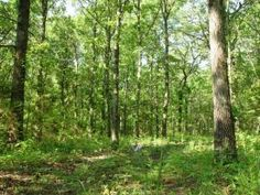 This is the land you have been looking for-Large wooded lot ready to be used any way you see fit. Build your dream home or a little retreat. Endless possibilities. Near Highway 65, which means a short drive to Springfield, Buffalo or Fair Grove.. Abundant wild game-deer and turkey, in case your interested in hunting! The property is at the end of a quiet gravel road, on a street that boasts beautiful homes on their own acreage as well. Its really a must see in Buffalo MO