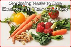 Gardening Hacks to Save Homesteaders Time and Money Homesteading  - The Homestead Survival .Com