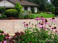 Borówcowy raj - strona 380 - Forum ogrodnicze - Ogrodowisko
