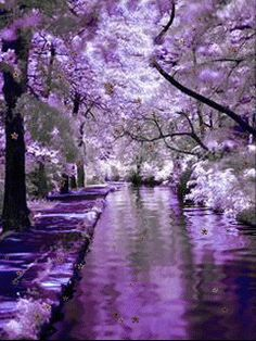 Cherryblossom forest
