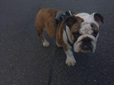 #MoJoe on his morning walk