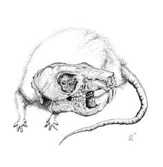 This is spectacular. rat skull website .jpg