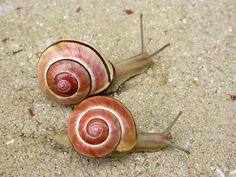 Land snails                                                                                                                                                                                 More