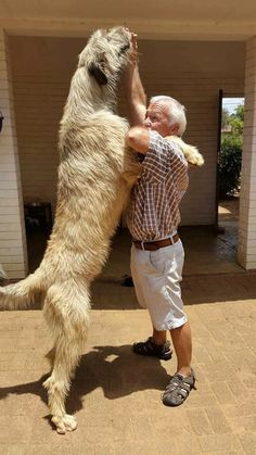 Feale's hound was probably something like this - very tall and impressive. I also like the light color of it. Deidre is going to want to get another dog someday. Huge Dogs, Giant Dogs, Baby Animals, Funny Animals, Cute Animals, Magyar Agar, Irish Wolfhound Dogs, Big Dog Breeds, Irish Terrier