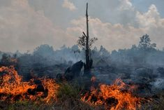 """A catastrophic loss in biodiversity, reckless destruction of wildland and warming temperatures have allowed disease to explode. Ignoring the connection between climate change and pandemics would be """"dangerous delusion,"""" one scientist said. Environmental Impact Assessment, Climate Warming, Environmentalist, Flu Season, Lake District, Climate Change, Habitats, Rainforests, Amazon Rainforest"""