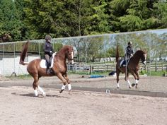 Mirrors in schooling arenas to help your riding article from Horse & Hound