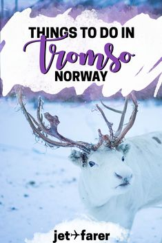 Traveling to Tromsø, #Norway sometime soon? We compiled a list of the top 15 things to do in Tromso to help you plan your trip! | tromso norway winter | things to do in tromso norway | aurora borealis norway | tromso norway travel | northern lights | winter travel | norway bucket list |