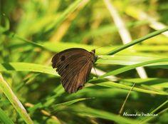 Farfalla (lepidottero) by Alessandro Venturino on 500px