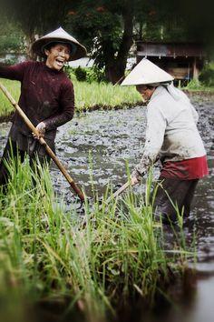 Filipinas working in the rice paddies