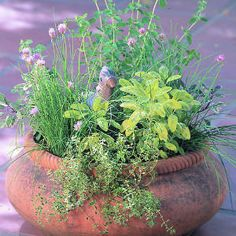 Gardening with Herbs 101: What to Grow--theme gardens (kitchen herb garden in a pot, medicinal herb garden and even herbs for kids)