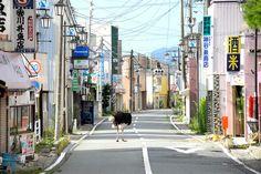The Abandoned Animals of Fukushima by Yasusuke Ota (via Visual Culture Blog)