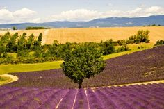 provence france - Google Search