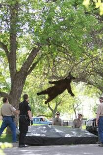 flying bear you..