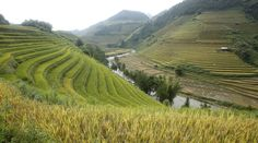 Terraced rice paddy fields during the harvest season in Mu Cang Chai, northwest of Hanoi, on October 4, 2015.