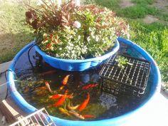 aquaponic-gardening-2-1024x768.jpg (1024×768)