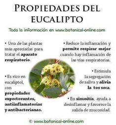 Health Diet, Health And Wellness, Health Fitness, Healing Herbs, Medicinal Plants, Natural Medicine, Herbal Medicine, Water Recipes, Natural Home Remedies