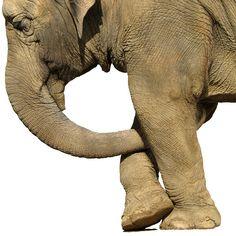 elephant!!