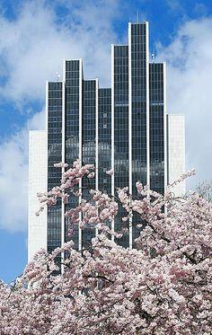 Cherry blossoms in front of the Radisson Blu Hotel, Hamburg