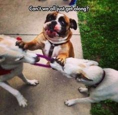 Funny, Memes, Pictures: the-funny-animals-10-1 #funnydogs