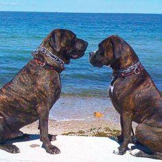 Moshup and Maggie enjoying some beach time on Martha's Vineyard