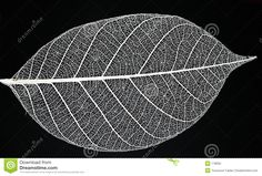 leaf skeletons - Google Search