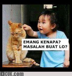 kucing, bocah, anak kecil, problem, masalah, pamanaji, paman aji