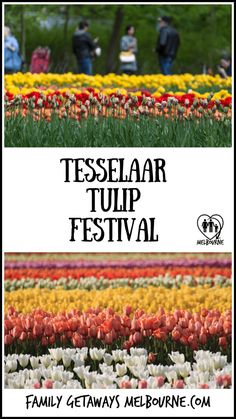 The Tesselaar Tulip Festival is held annually in the month of September in Silvan, highlighting tulips, daffodils and other colourful blooms