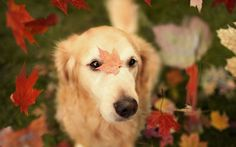 DogBreeds Our Site Is Base On Latest Dogs Funny Picture We Also - 20 reasons why you should be thankful to have a dog