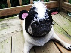 Hilarious Knitted Hats For Your Dog