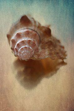 Photograph - Empty Nest by Maggie Terlecki , Restaurant Website Templates, Limited Edition Prints, Sea Shells, Nest, Fine Art, Sea Foam, Mint Green, Empty, Photograph