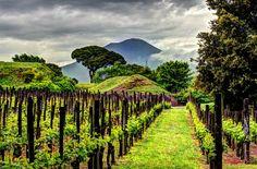 Pompeii by Caroline