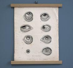 #wallhanging #wallchart #engraving #etching #fineart #vintagedecor #medicine #eyes