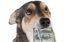 One of our DogTime fans has questions for Dear Labby about a dog who ate her money. Will her dog be okay? Dear Labby has the answer! Back Pictures, Dog Eating, My Money, Picture Credit, Dog Food Recipes, Pup, Corgi, This Or That Questions, Animals