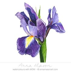 I always think of the Spring Iris as a 'Flag' that signals the start of spring. Learn how to capture its range of hues in my latest Online School tutorial