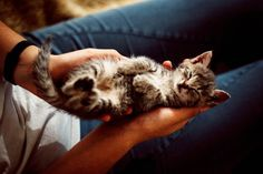 Grey Tabby Kittens, Grey Kitten, Baby Images, Pictures Images, Doctor Images, Friendship Images, Super Images, Sleeping Kitten, Owning A Cat