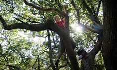 Children told to go play outdoors in new nature campaign: Wild Network aims to get schoolchildren off their computers and outdoors to experience the wonders of the wilderness