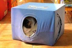Una remera, una caja y un gato feliz
