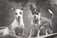 Chloe and Daisy